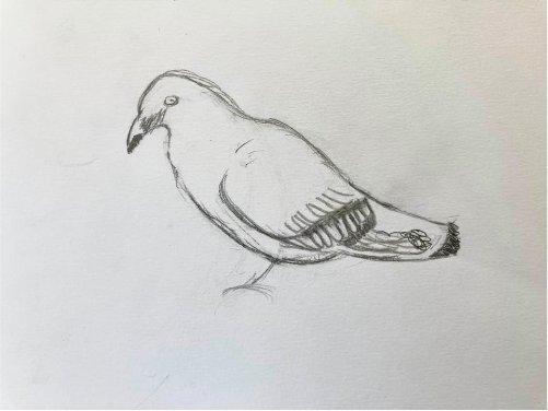 Cours de dessin à Savio