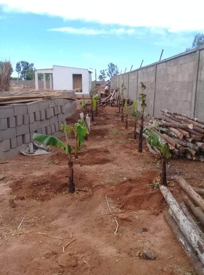 jardin madagascar